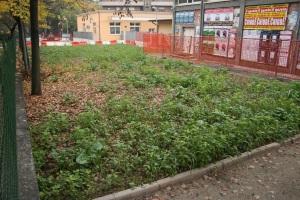 L'area verde in sostituzione di via Galilei. A servizio delle scuole? (foto del 18 novembre 2012)