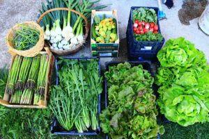 Le verdure di Ivan e Ivaldo nel mercatino del mercoledì, presso l'azienda agricola La Bifolca.